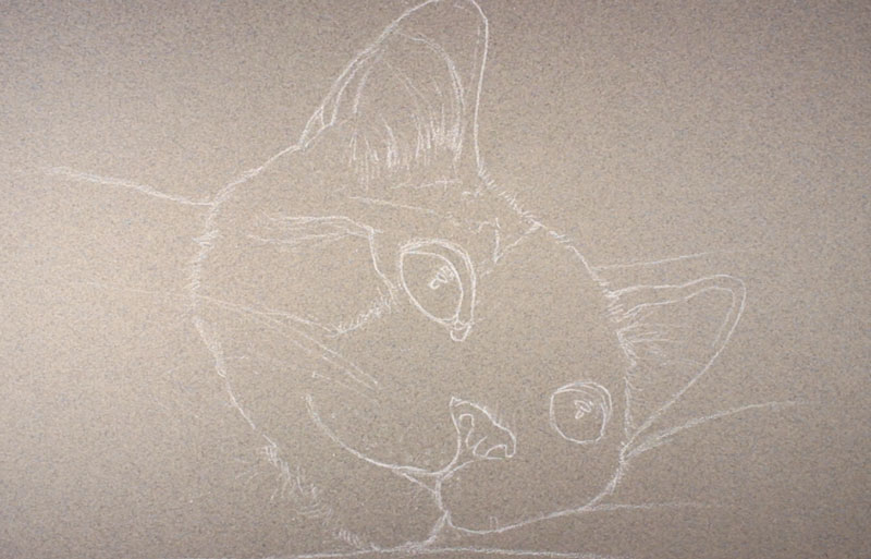 Contour Line Drawing Of A Cat : How to draw a cat with pastels