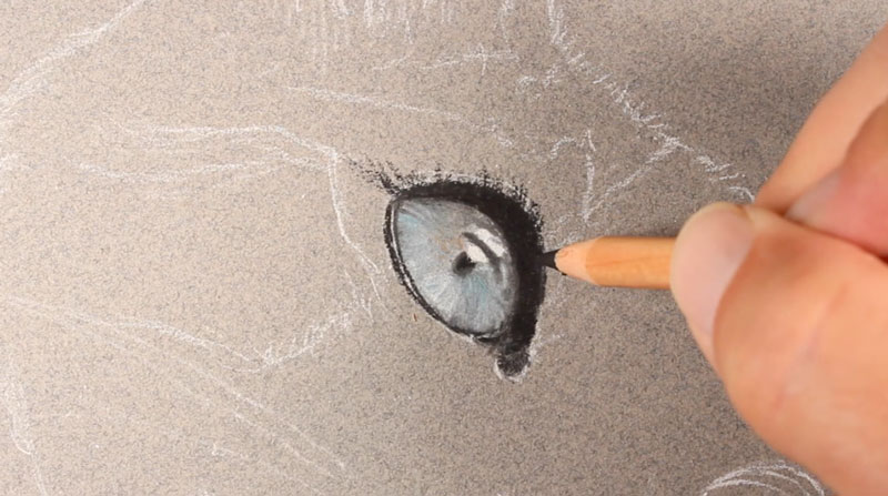 Draw the eye of the cat