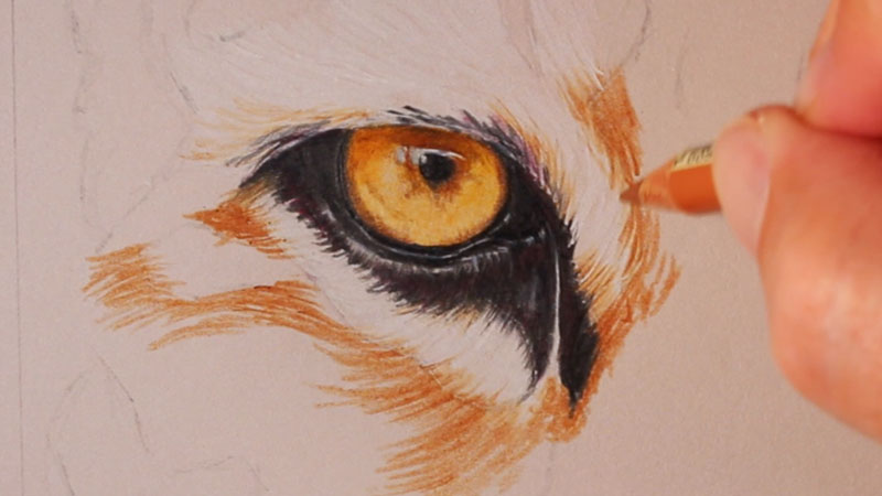 Drawing the second tiger eye