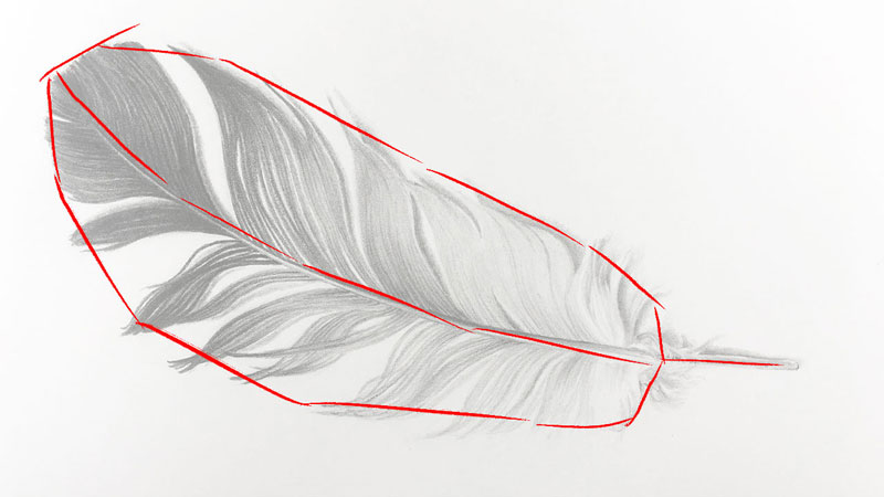 Drawing the larger shape of the feather