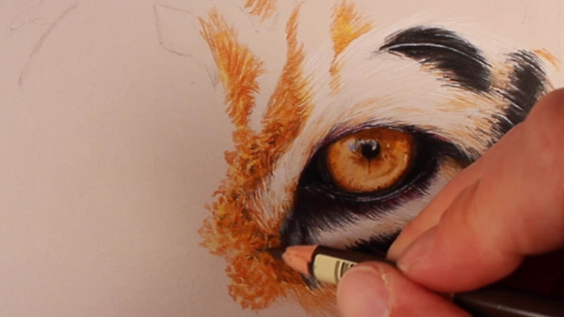 Drawing the fur around the first eye