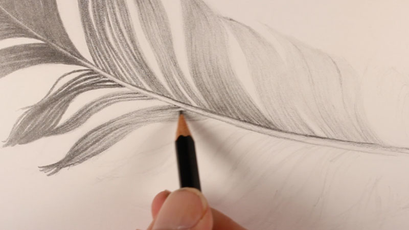 Use directional strokes to draw the body of the feather
