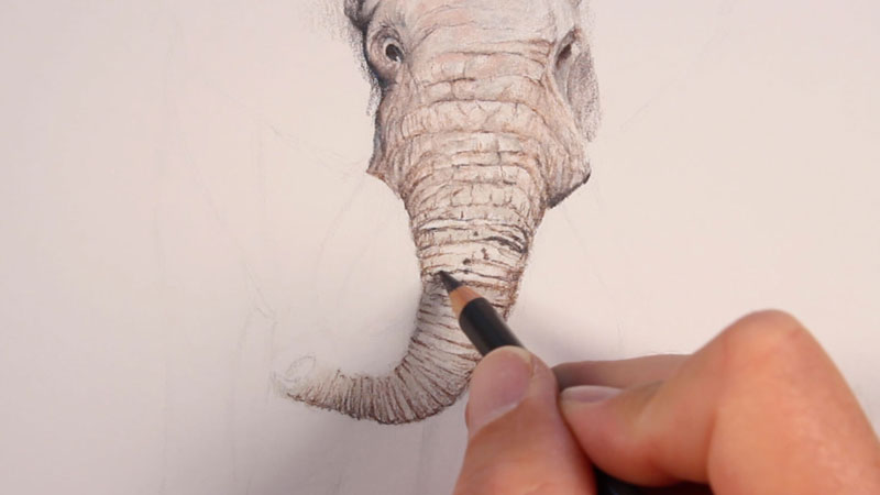 Drawing the trunk