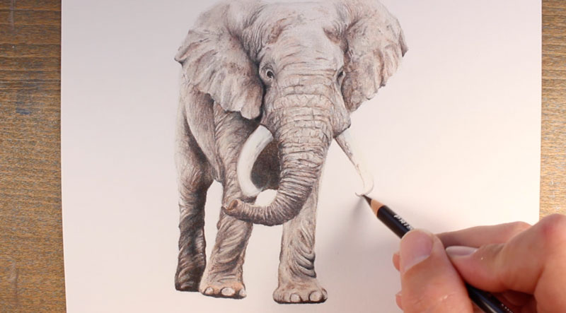 Draw the elephant tusks