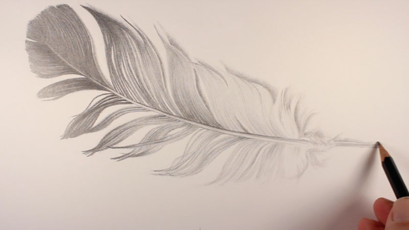 Shading the feather at the quill