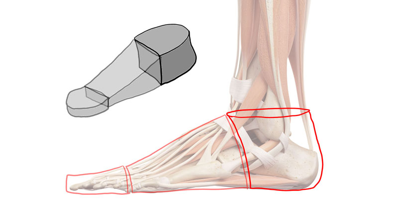 The form of the heel of the foot