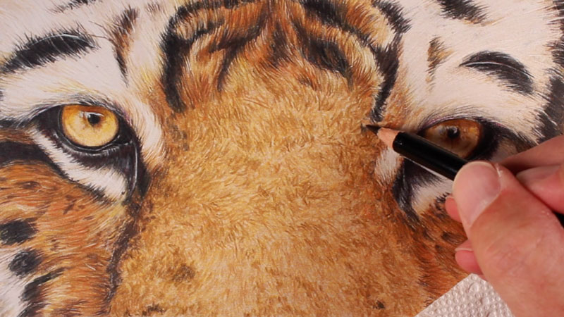 Creating the texture of the tiger fur
