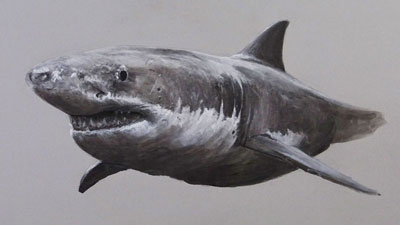 Mixed Media Drawing Lesson - Great White Shark