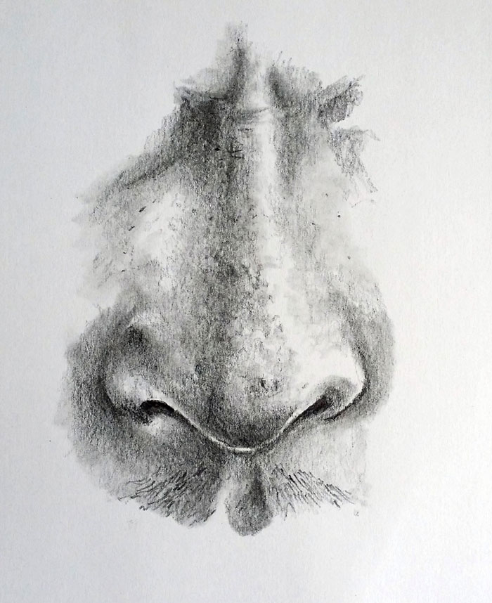 Realistic Nose
