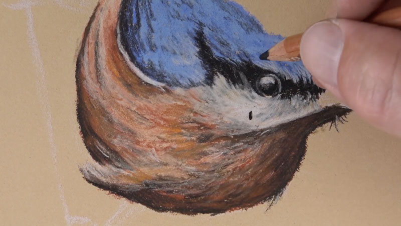 Drawing the eye of the bird.