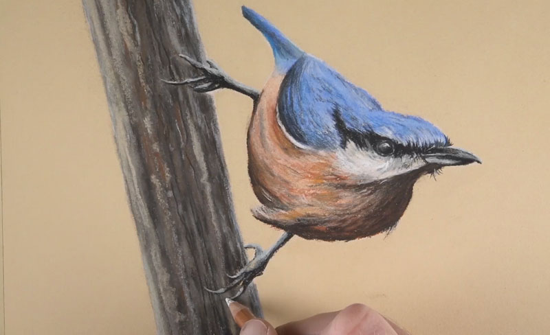 Drawing bird talons with pastel pencils