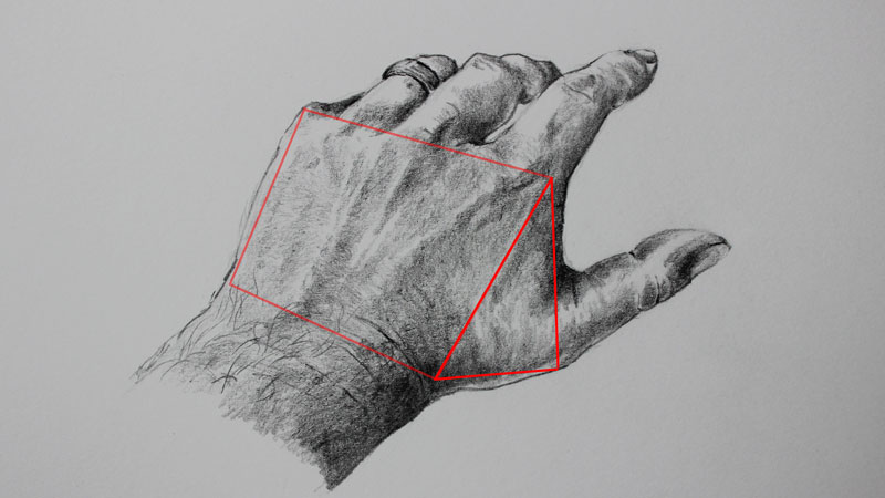 Connection between the palm and the thumb