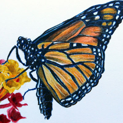 Colored Pencil Butterfly