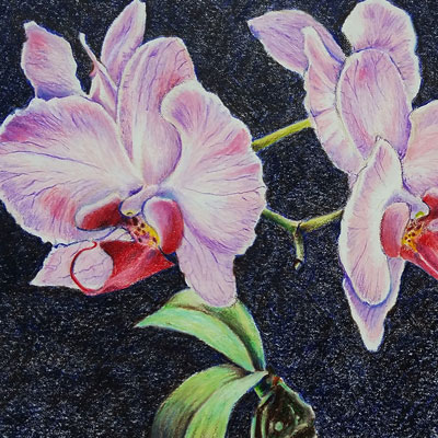 Colored Pencil Orchid