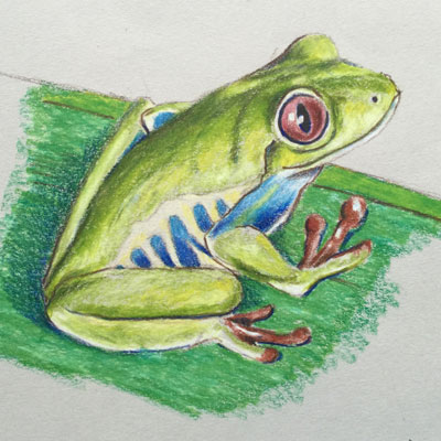 Colored Pencils Frog