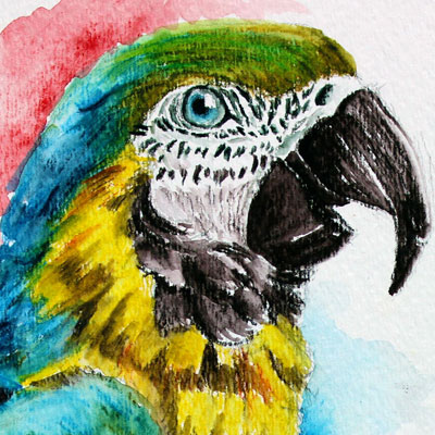Inktense Pencils Macaw