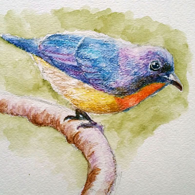 Watercolor Pencils Bird