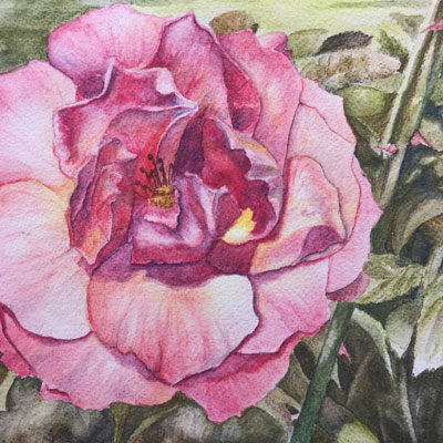 Watercolor Pencils Flower Lesson
