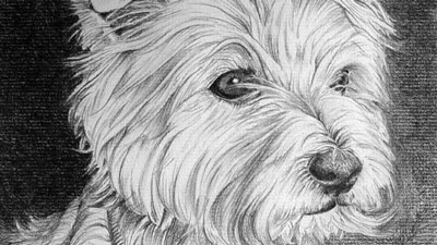 Graphite drawing of a dog - step by step