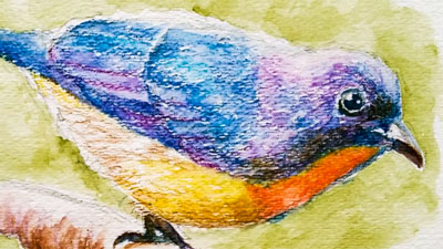 How to draw a bird with watercolor pencils