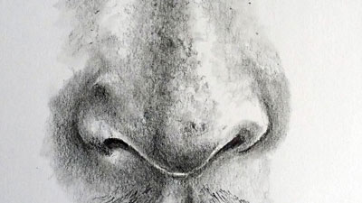Free Drawing Lessons- How to Draw Noses