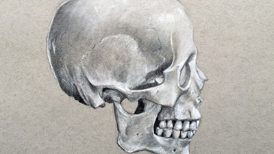 Drawing the skull-profile view