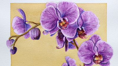 Watercolor pencils Orchid Lesson Part 1