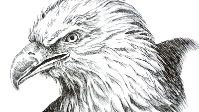 How to draw an eagle with pen and ink - lesson series