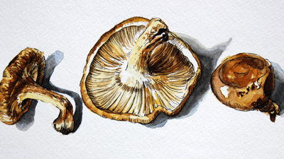 How to combine pen and ink and watercolor - mushrooms
