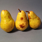 Reference Photo for Still Life Pears 4
