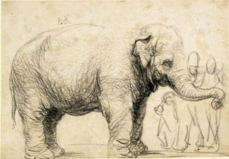 """An Elephant"". Rembrandt, Circa 1637. Black chalk and charcoal"