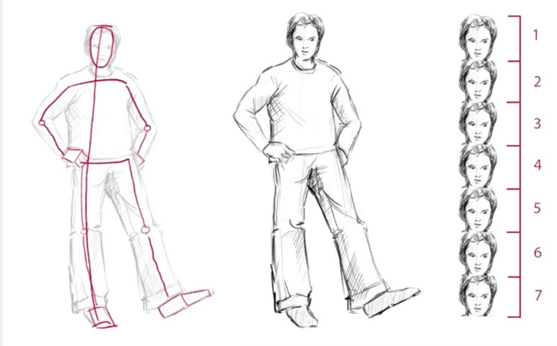 Basic Figure Drawing Proportions