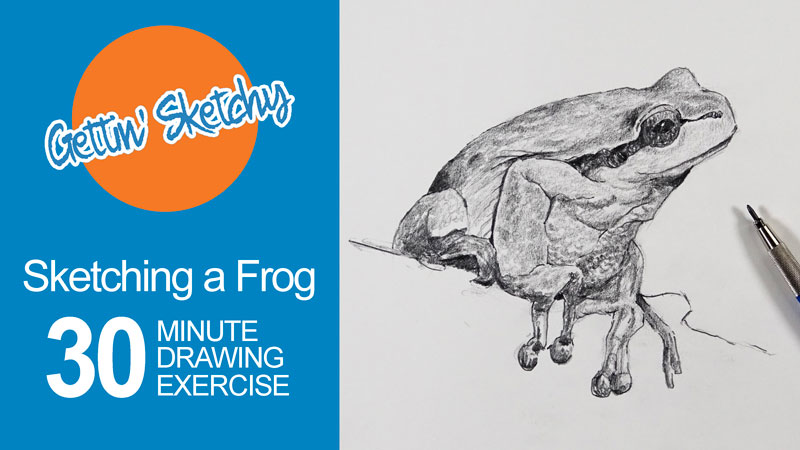 Timed Sketching Exercise - Frog