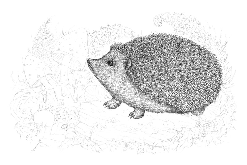 Draw the feet of the hedgehog