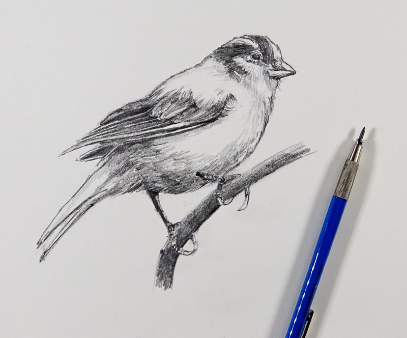 How to Sketch a Bird with Pencil