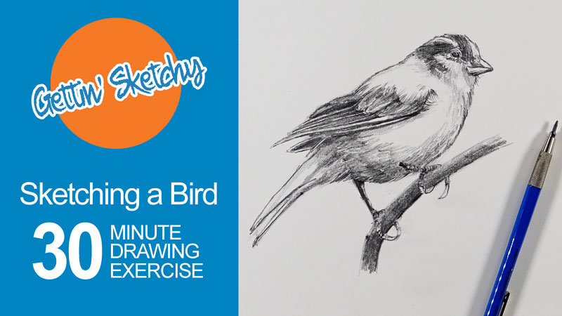 How to Sketch a Bird