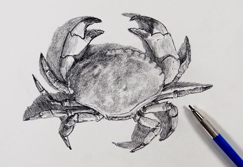 How to Sketch a Crab