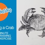 How to Sketch a Crab - 30 Minute Drawing Exercsie