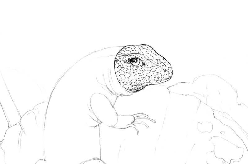Drawing the lizard's head with ink
