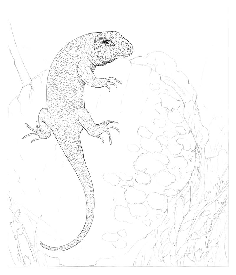 Adding additional texture to the body of the lizard