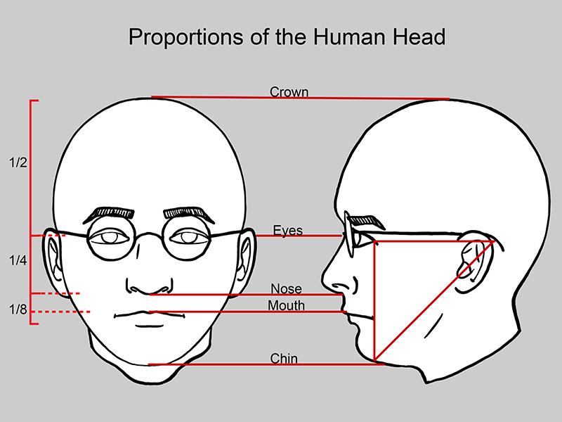 Human Facial Proportions