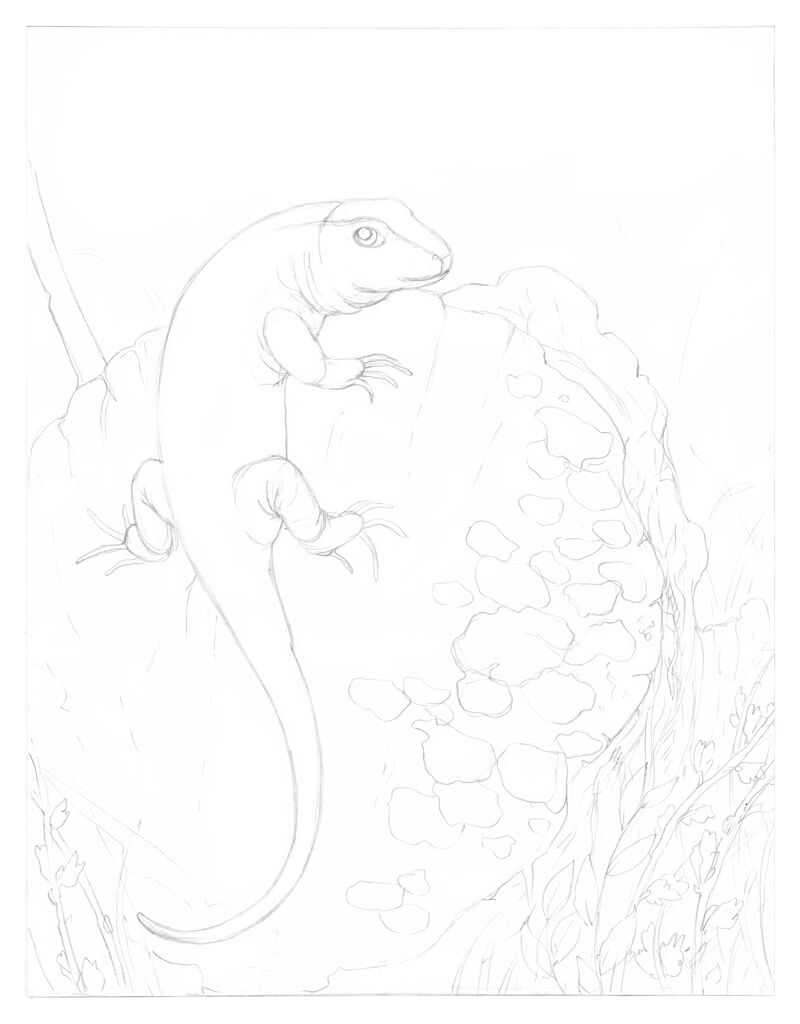 Refine the pencil drawing of the lizard