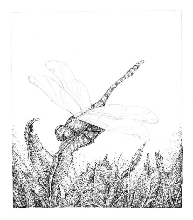 Stippling the body of the dragonfly