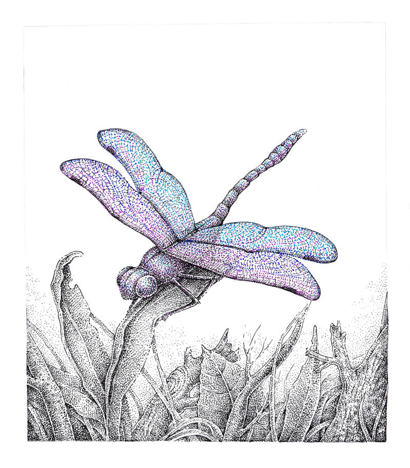 Pen and Ink Drawing of a Dragonfly