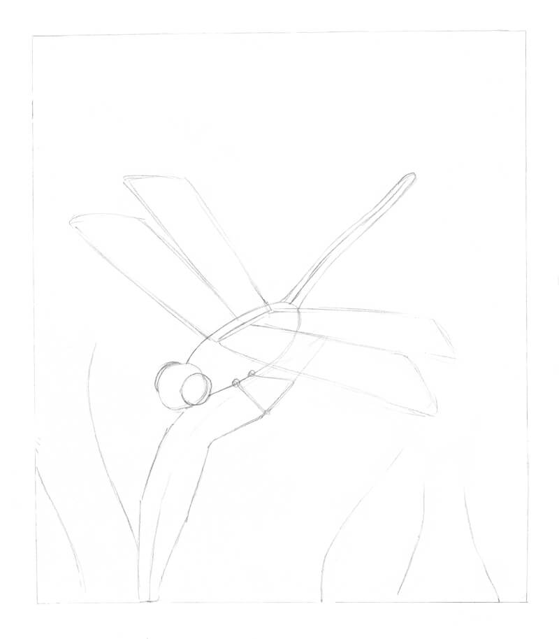 Pencil sketch of a dragonfly before adding ink