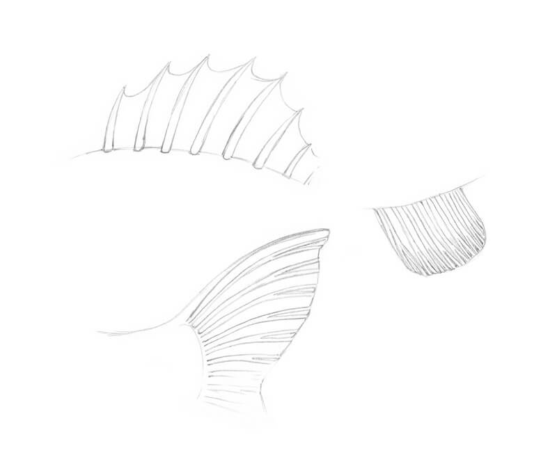 Drawing fish fins