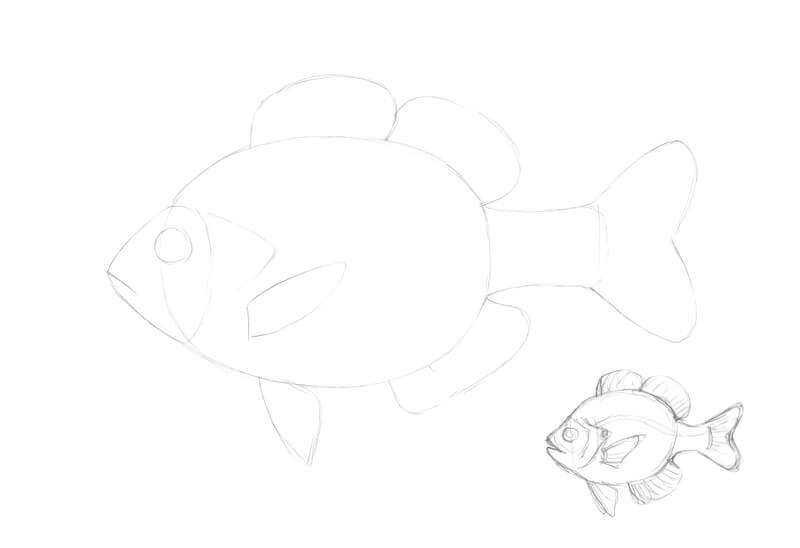 Sketching a fish