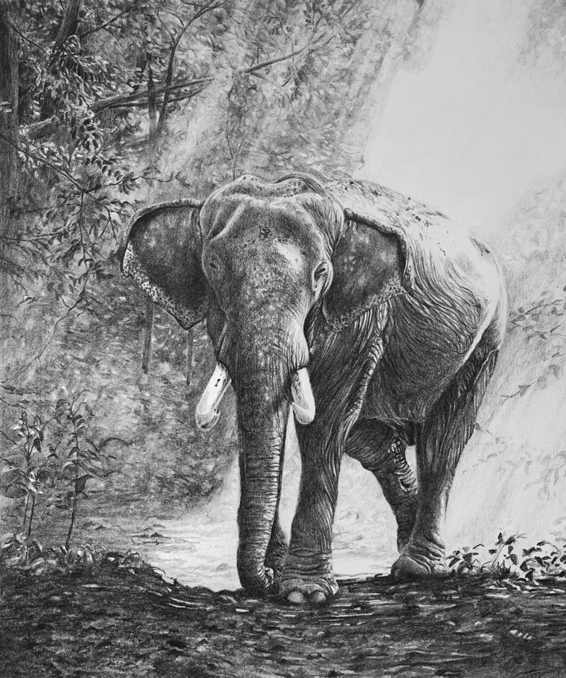 Pencil drawing of an elephant