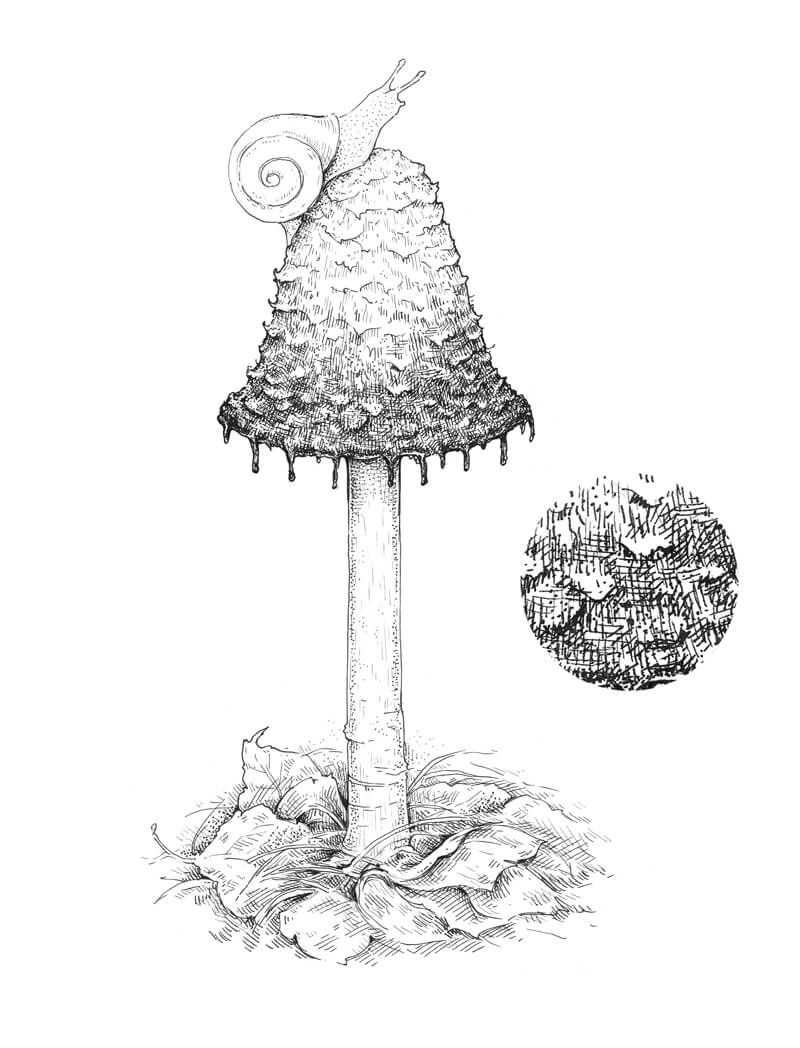 How To Draw A Mushroom Pen And Ink
