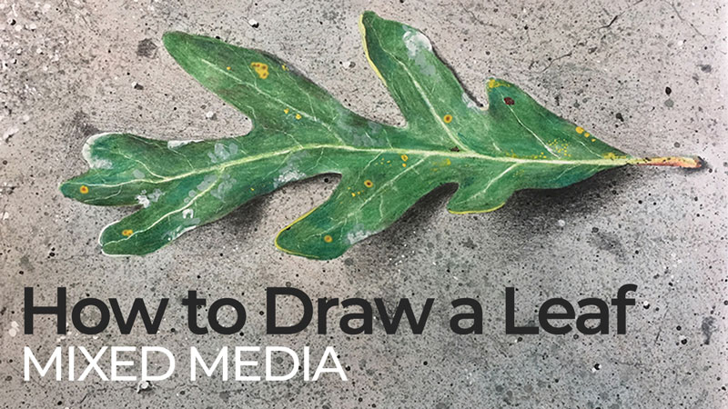 How to Draw a Leaf with Watercolor and Colored Pencils